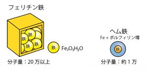 フェリチン鉄の構造